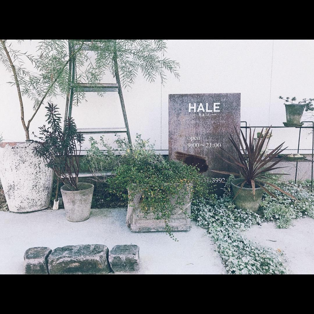 HALEHAIR