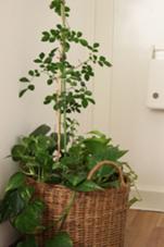 緑がたくさんのサロンです! salon de relief リリーフ所属・市川紗弥香. のフォト