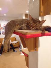 これも猫です(・Д・) es所属・猫石キャト平のスタイル