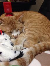 うん、猫です(・Д・) es所属・猫石キャト平のスタイル