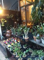 お店の外見です◎植物がたくさんあるのでわかりにくいかもしれないのですが、カネゴンが目印になります◎ magico所属・小島ひろな副店長のスタイル