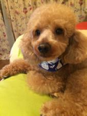 ただの愛犬です❤️ lejardin古淵店所属・湯之上和哉のスタイル