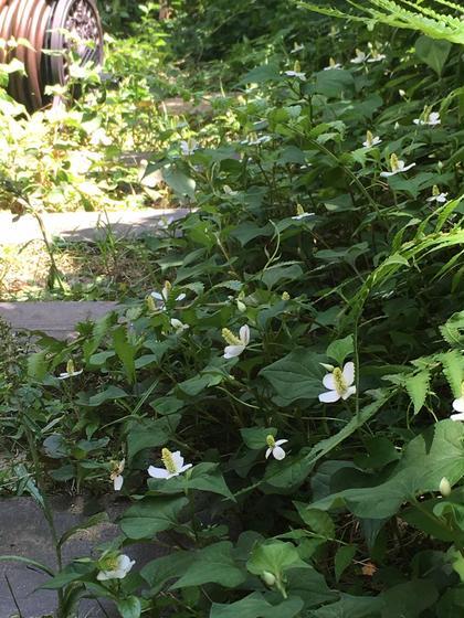 季節により、フットバスにドクダミを浮かべたり、庭の自然を生かしてご提供します。