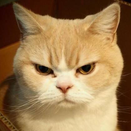 うん、いい顔です es所属・猫石キャト平のスタイル