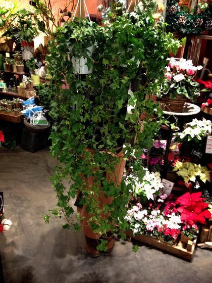 店内で最もお気に入りの観葉植物です☆ ワンバイワン 鷺沼店所属・ワンバイワン 鷺沼店Arisaのフォト