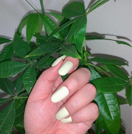 もう春ですね🌸 このスナップフォトの爪のお色は パステルカラーのイエローとなっております💛 お手元を春色に染めてみませんか? より、春をお楽しみいただけるかと思います😊  小手川奈々子の