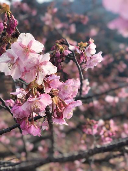【ミニモ春きゅん】✨学生応援✨似合わせカット & オートクチュールヘアカラー & うる艶トリートメント