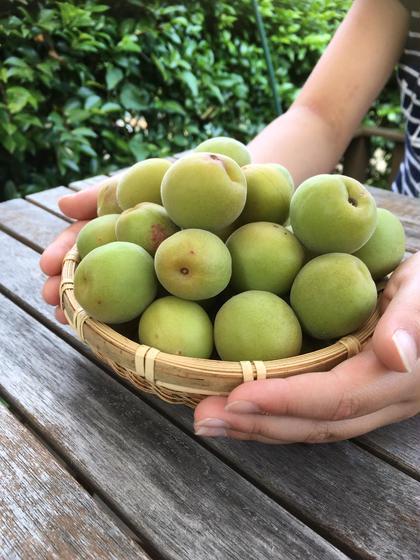 この夏は、庭でとれた自家製梅シロップをご提供。