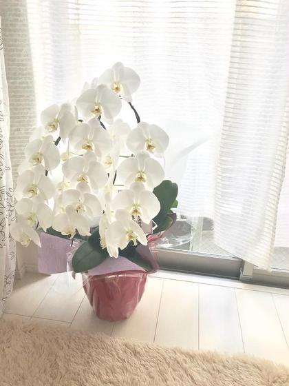Relaxation&BrazilianwaxManoAMano所属・Naomiなおみのフォト