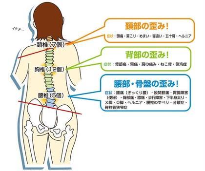 背骨、骨盤矯正1ヶ月受け放題