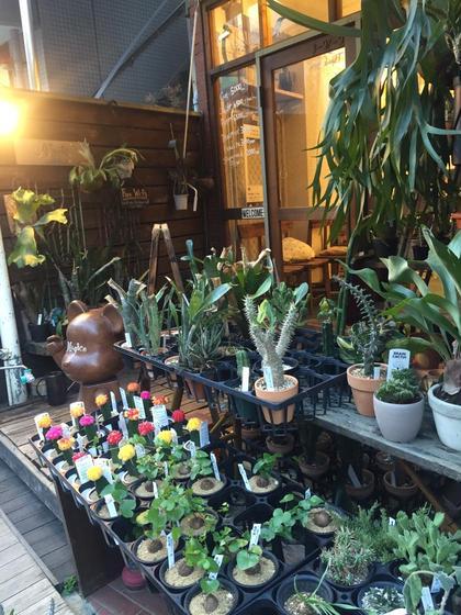 お店の外見です◎植物がたくさんあるのでわかりにくいかもしれないのですが、カネゴンが目印になります◎ magico所属・小島ひろな店長のスタイル