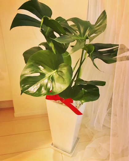 緑がいっぱいの落ち着く空間♬ Relaxation&BrazilianwaxManoAMano所属・Naomiなおみのフォト