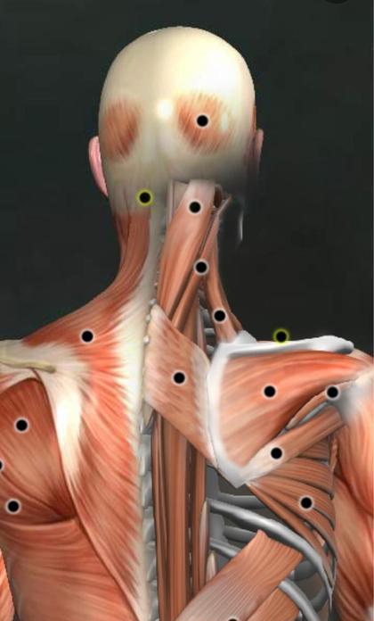 ◆ミニモ限定◆ ✨首肩スッキリ!猫背改善💗筋膜・肩甲骨はがし❤️💛💚